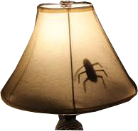Insect in a lampshade!