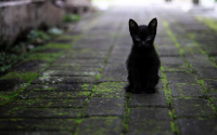 Black%20kitten.png